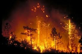 feux de forêts.jpeg